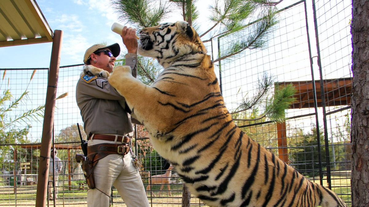 Quello che Tiger King ci può insegnare per il Gap Year…